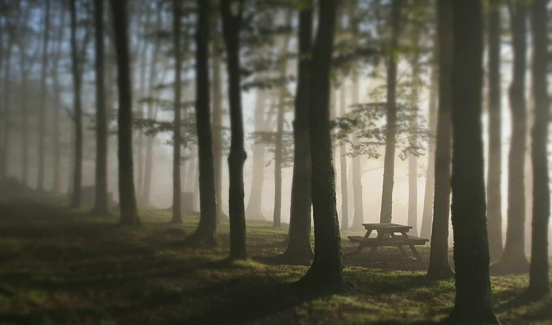 туман, лес, скамья, деревья, картинка, картинку,