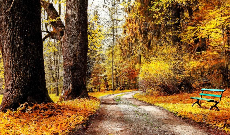 парк, природа, осень,