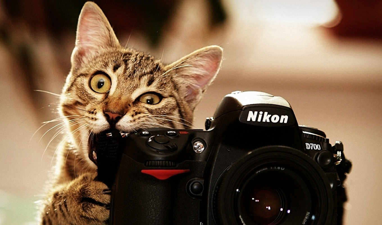 фотограф, кот, camera, nikon