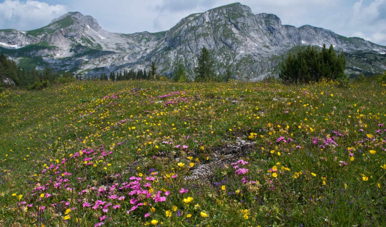 альпы, summer, цветы, горы, австрия, деревя, трава, природа,