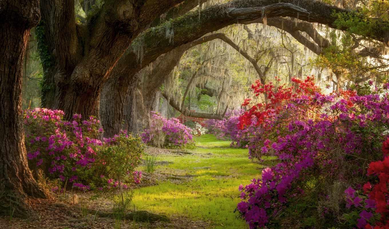 природа, gif, южная, весна, android, carolina, cvety, магнолии,