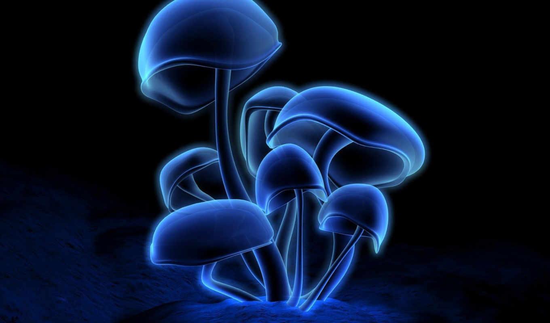 la, обои, не, грибы, красную, того, ta, un, quot,
