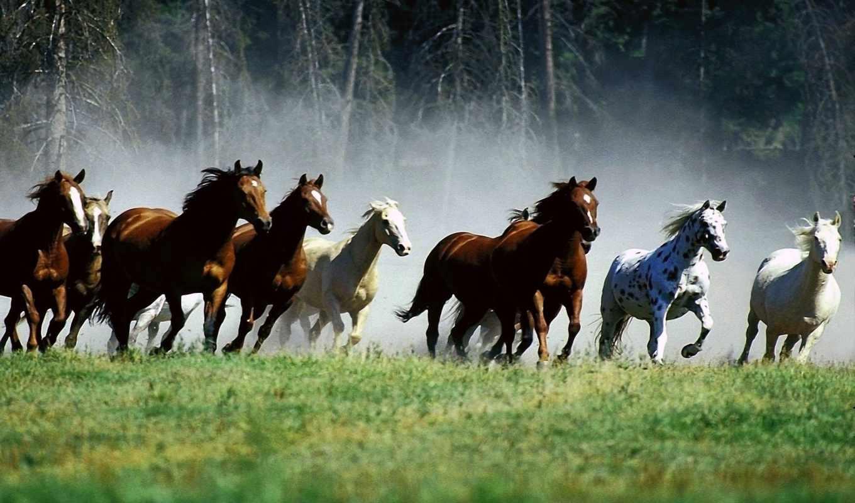 картинка, животные, звери, desktop, horses, background, free, poster, animal,