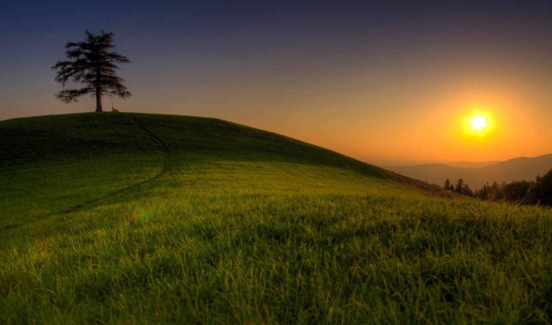 природа, дерево, пейзажи, деревья, травка, картинка, красивая, очень, машины, автомобили, авто,