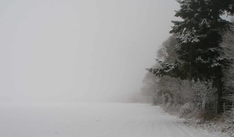 деревья, зима, снег, новый, природа, год, метель, лес, зимние, дерево,