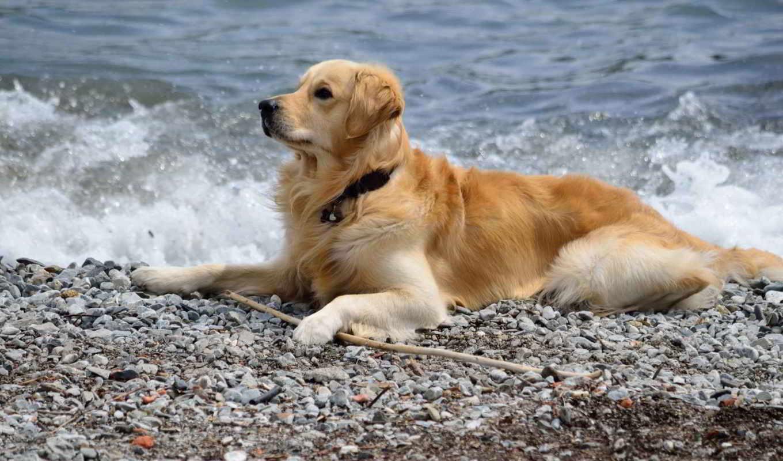 море, собака, друг,