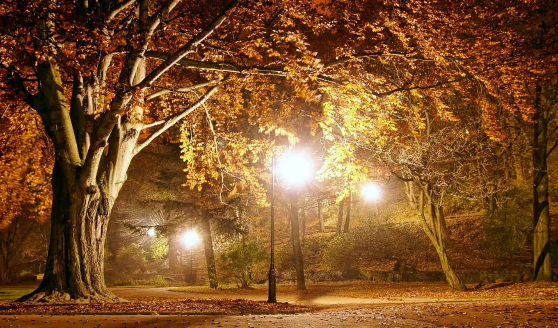park, осень, флот, romantic, ночь, природа, season, вечер, trees, пасть, дорога, огни,