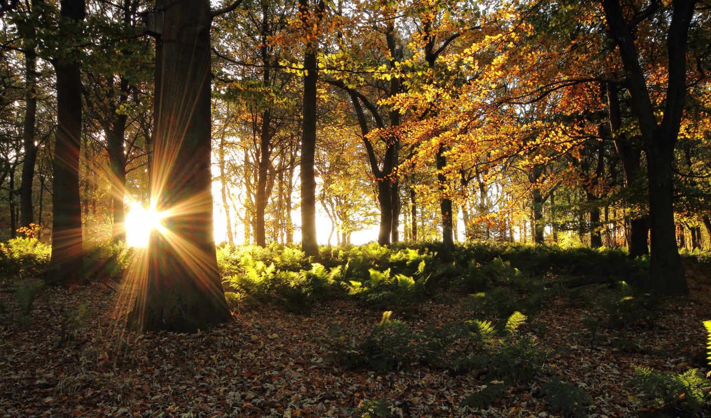 зайцев, слушать, формате, музыка, портал, online, лес, different, осень, rays,