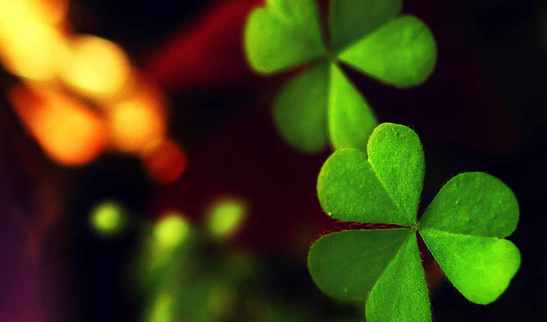 clover, широкоформатные,
