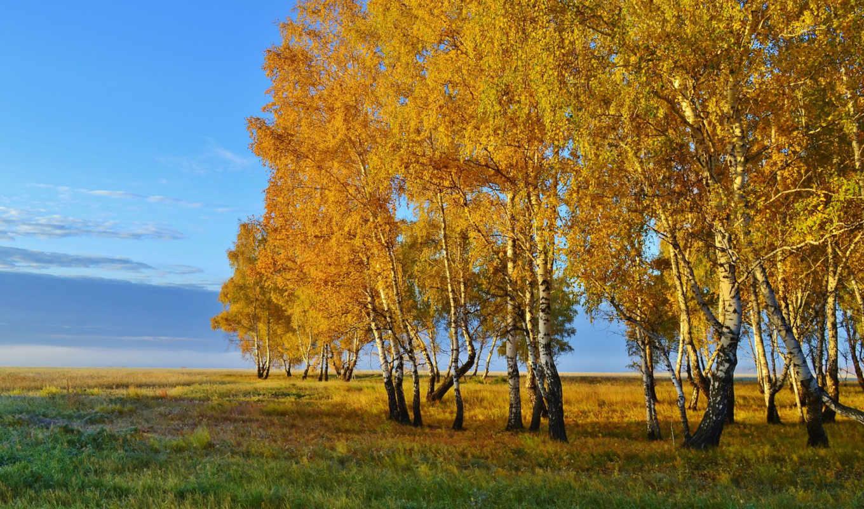 осень, картинка, природа, года, времена, коллекция, картинок, desktopwallpape, березы,
