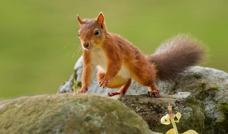картинка, tail, tapety, zhivotnye, collector, stump, белки, грызуны,
