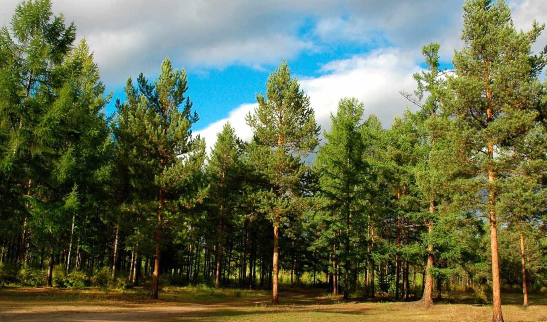 участки, пейзажи, земельные, дмитровка, широкоформатные, великолепные, обл, участок, киевская, соток, дымер, красивые, высококачественные, количество, объявления, дек, коттеджном, views, город,