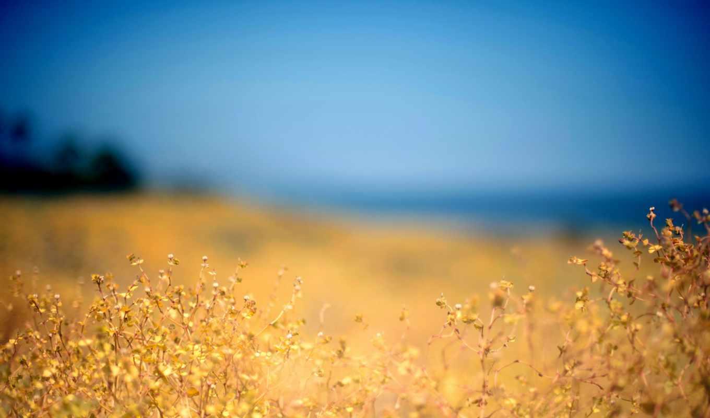 ,priroda, pole, небо, растение,,