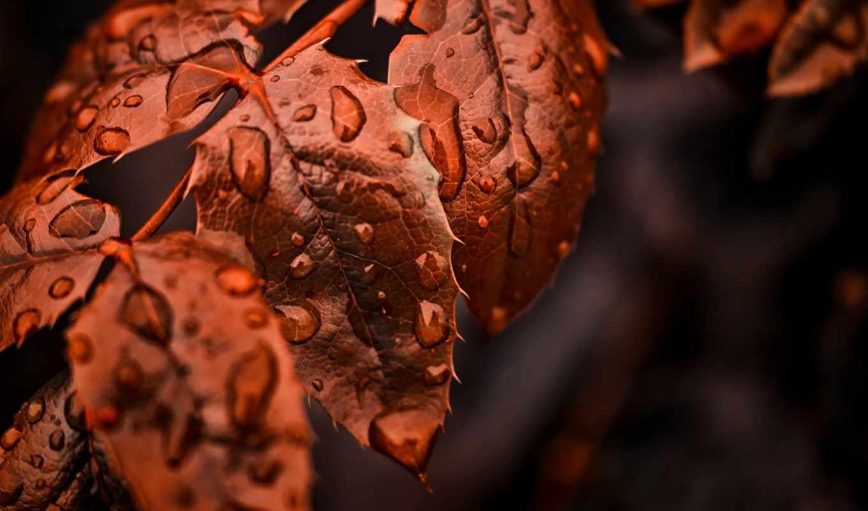 makro, osen, листья,