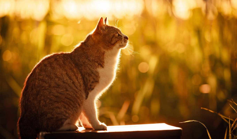 кот, summer, морда, природа, трава, red, свет, боке, сидит, взгляд,