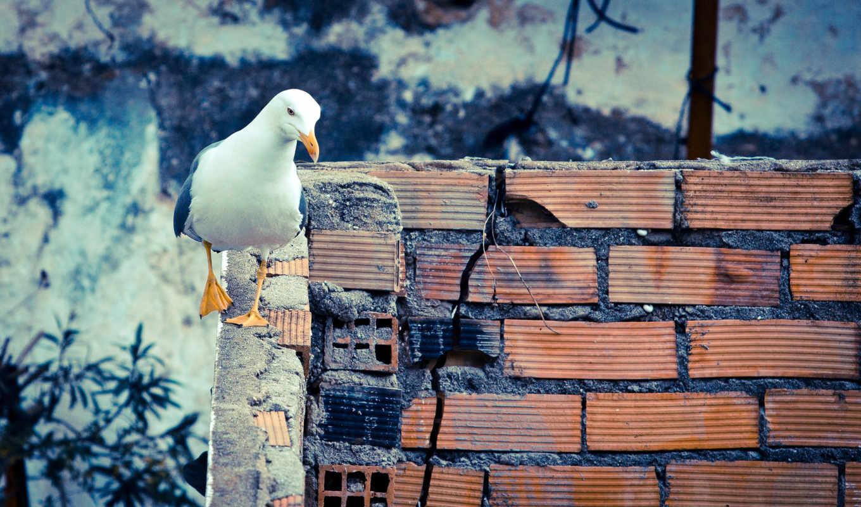 стена, птица, walls, gulls, free,
