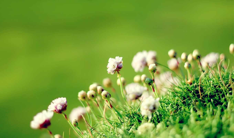 луговые, трава,