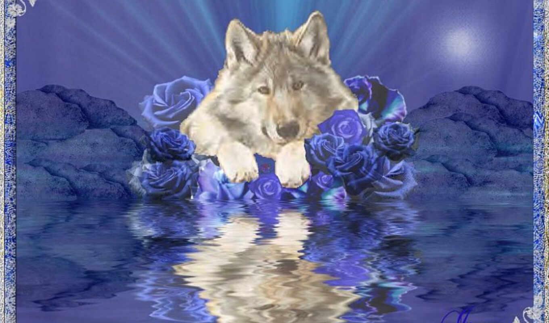 день, have, волк, ссылка, direct, графика, хороший, bb, share, great,
