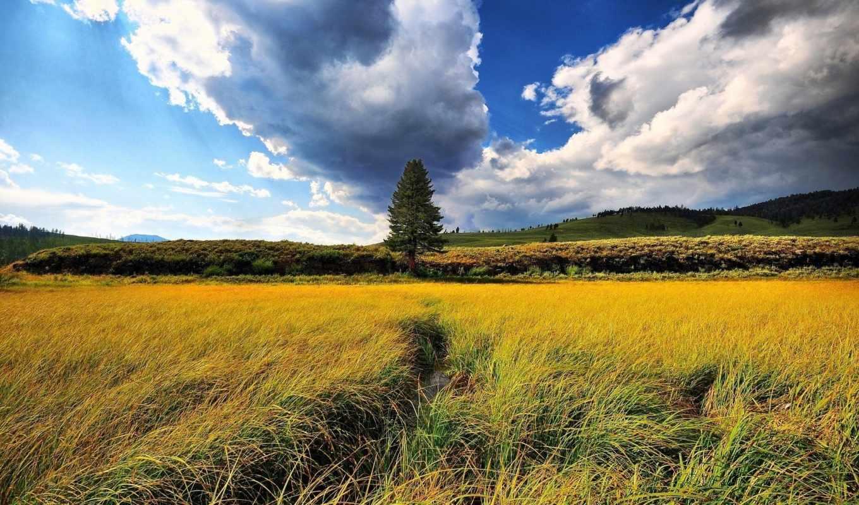 природа, пейзажи -, трава, поле, деревья,