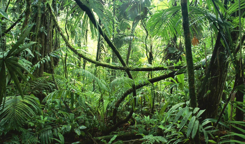 лес, tropical, природа, деревья,