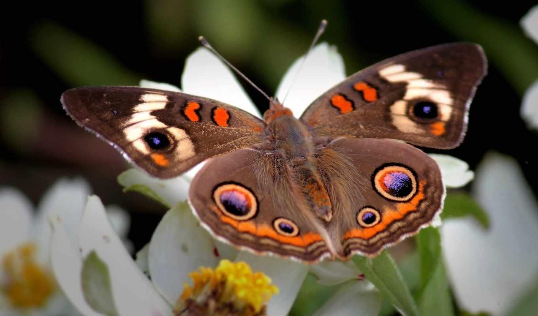 бабочка, цветке, цветы, wings,