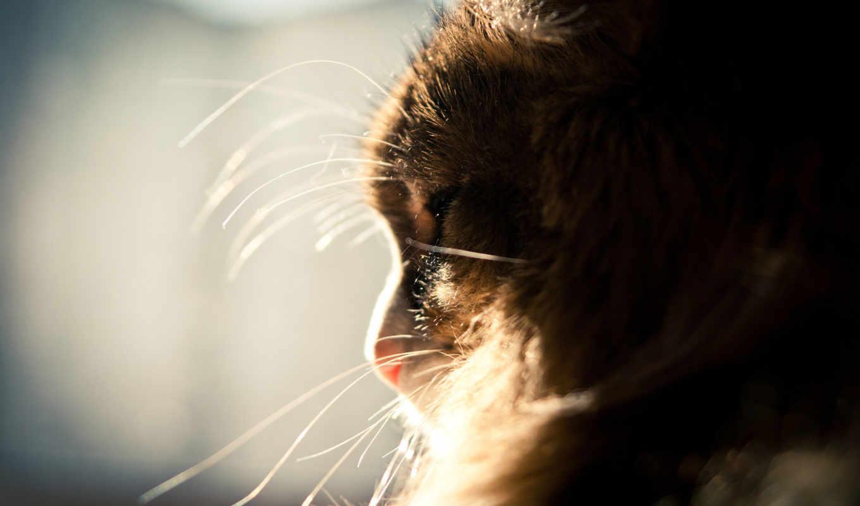 кот, пушистый, усы, спит, sun, окно,