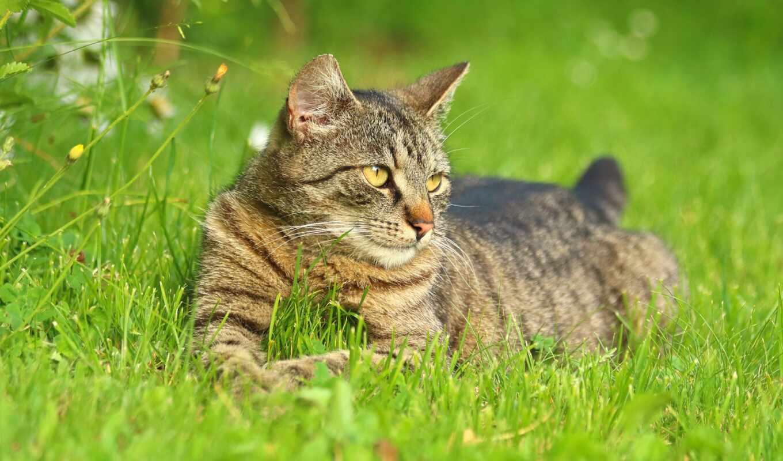 кот, domestic, garden, animal, domain, public, summer, royalty, фото, трава, pikist
