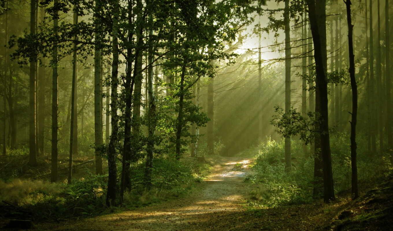природа, лес, пейзаж, картинка, правой, тропа, кнопкой,