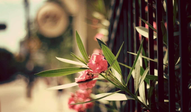 цветы, фон, природа, лепестки, гелевые, листья, ногти, design,