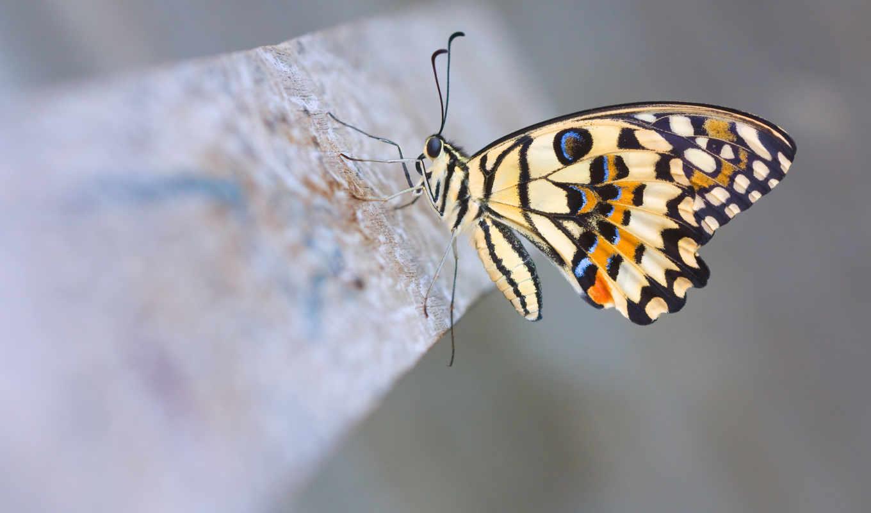 бабочка, бабочка, бабочки, цветок, витраж, vektor,