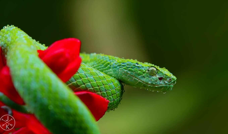 xbox, youtube, зелёный, one, snake, цена, grey, red