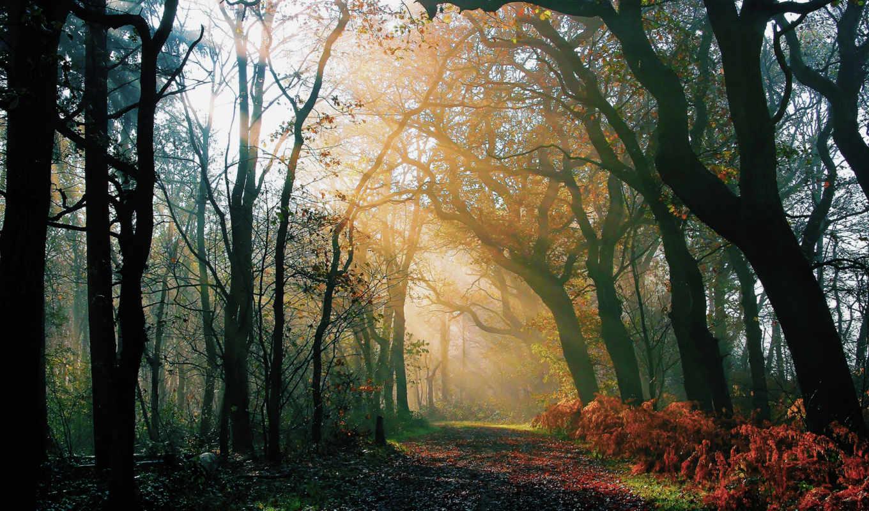 лес, после, дождя, природа, осень, свет, утро, дорога, картинка,
