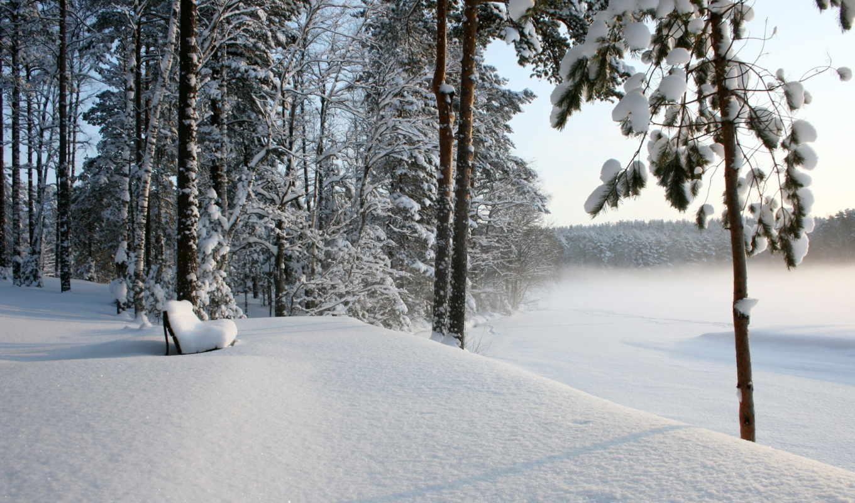 зима, лес, скамья, снег, desktop, scenery, trees, landscape,
