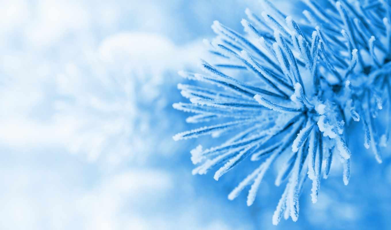 зима, snow, елка, дек, голубой, ёль, макро, разделе,