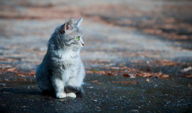 улица, кот, одиночка, картинка,