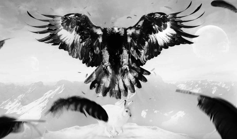 орел, птица, art, заяц, горы, перья,