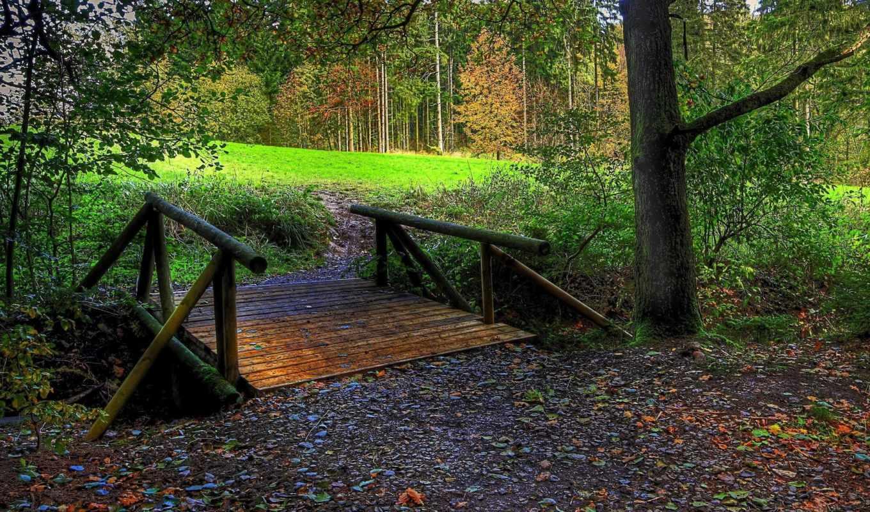 мост, лес, wooden, осень, free,