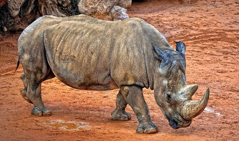 rhino, images,