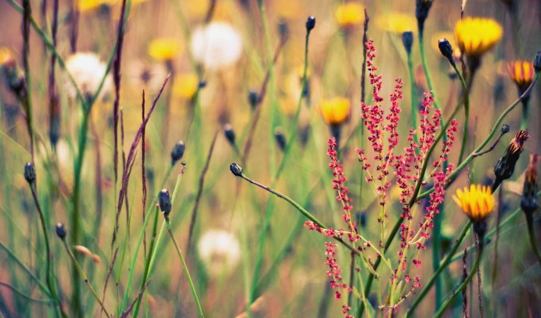 растительность, цветы, природа, поляна, summer,
