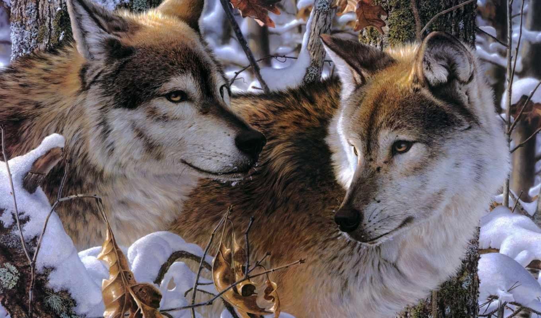 волки, животные, wolves, волк, winter, нравится, снег,