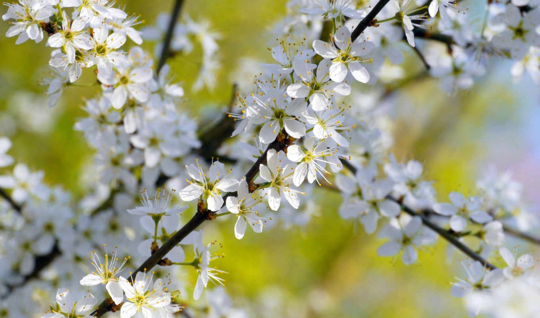 дерево, цветение, trees, keywords, tagged, branch, this, цветы, flowers,
