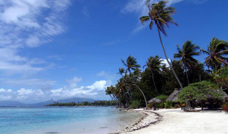 пляж, пальмы, песок, tropics, природа,