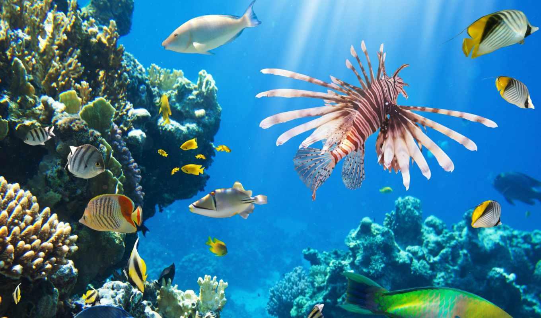coral, ocean, underwater, риф, fish, заказать, fishes, пейзажи -, природа,