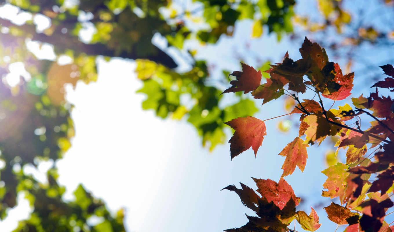 ветки, небо, осень, природа, листва, картинка, autumn, sky, похожие, листья,