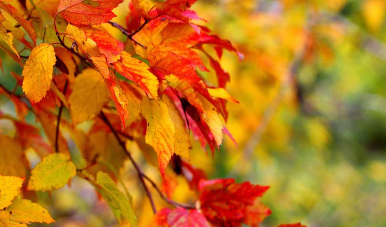 листья, макро, осень, деревья, картинка,
