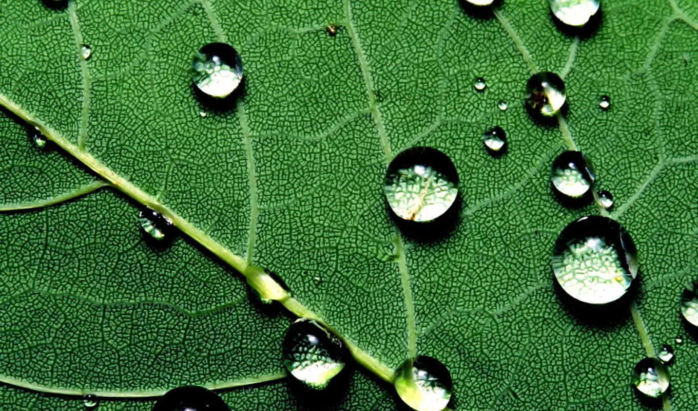 капли, листе, дождя, дождь, лист, воды, росы,