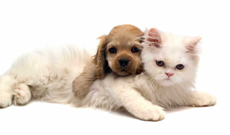zhivotnye, животных, кошки, телефон, собаки, щенок,
