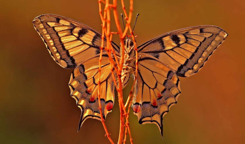 best, pack, mixed, мото, mix, бабочка, разных, desktop, amazing,