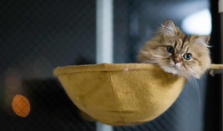 ,кот,лежак,киса,