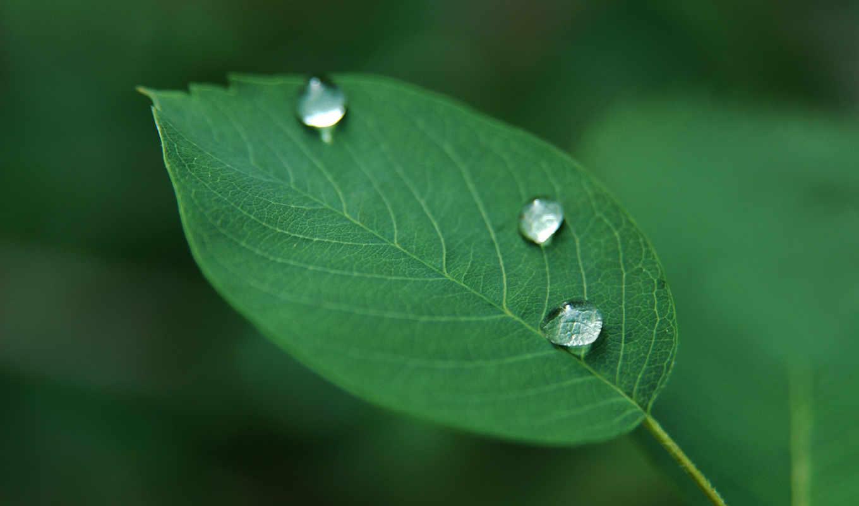 капли, зелёный, растение, листик,